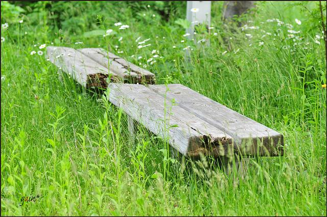 DSC_6390hc-grass.jpg